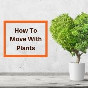How To Move With Plants – Tips For Moving With Plants