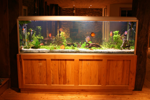 Kent how to move an aquarium - how to move with fish image